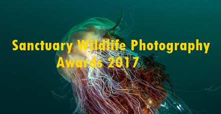 Sanctuary Wildlife Photography Awards