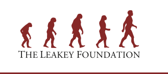 Grant for Human Studies by Leakey Foundation