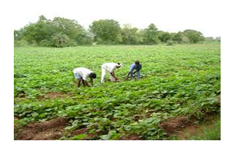 CfP: National Symposium in Role of Resource Management in Agriculture @ Institute of Agricultural Science [Dec 15-17, Kolkata]:  Submit by Sep 15