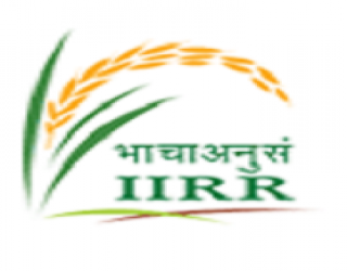 JOB POST: Research Fellow/ Young Professional/ Assistants @ Indian Institute of Rice Research [Hyderabad]: Walk-in Interview on Feb 14-16 & 18-19