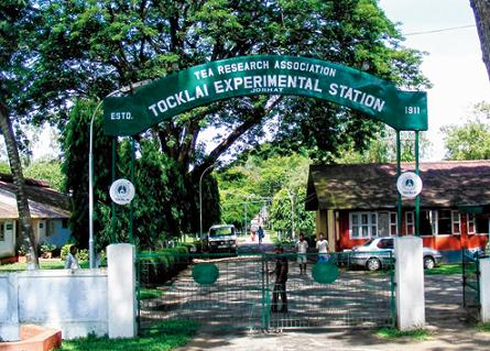 Scientists Estate Manager Tocklai Tea Research Institute Assam