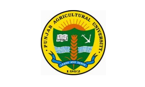 Punjab Agricultural University SRF Job