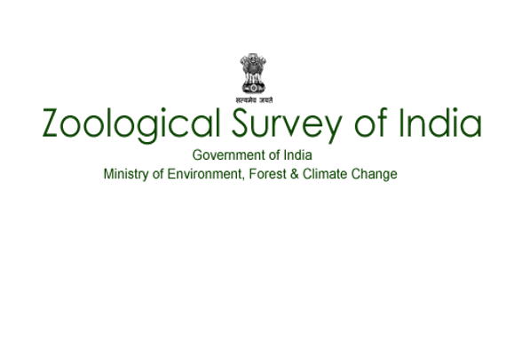 Zoological Survey of India Job