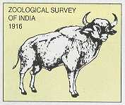 JOB POST: Junior Research Fellows at Zoological Survey of India, Kolkata [Monthly Salary Rs. 16K]: Walk-in-Interview on Sept 24