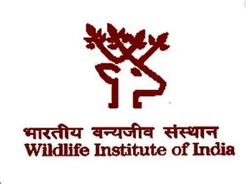 Wildlife Institute of India job