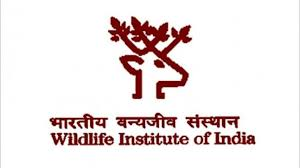 job jrf project associates assistants fellow wildlife institute india