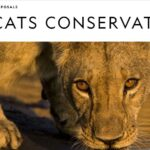 National Geographic Big Cats Conservation Grants 2020