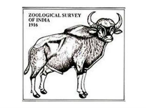 JOB POST: JRF & Project Associate (Under DST Funded Project) at Zoological Survey of India, Kolkata: Apply by June 17