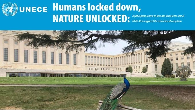 """UNECE """"Humans Locked Down, Nature Unlocked"""" Global Photo Contest 2020"""