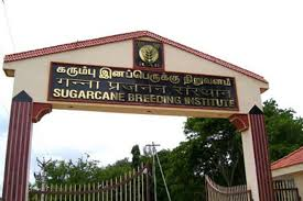 Sugarcane Breeding Institute JRF