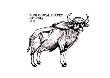 Junior Research Fellow at Zoological Survey of India, Dehradun: Apply by Sep 8: Expired