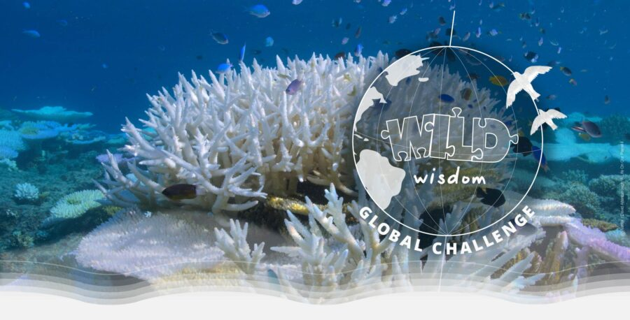 CBSE-WWF-India Wild Wisdom Global Challenge 2021 for Class 6–9 Students: Register by Aug 31