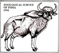Project Fellow (Research Biologist) by Zoological Survey of India, Chennai: Apply by Sep 30: Expired